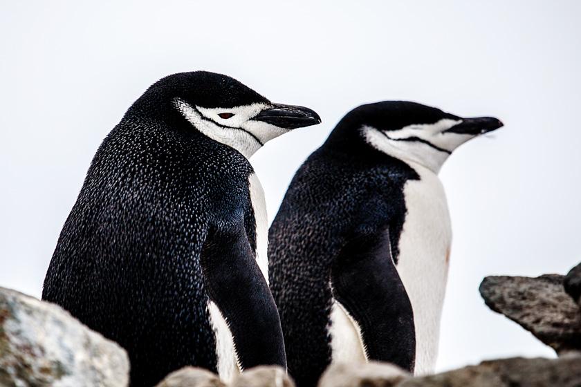 AopZ_Antarctica_2014_01_04_2184