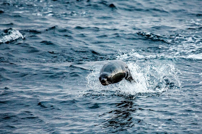 AopZ_Antarctica_2014_01_18_5711