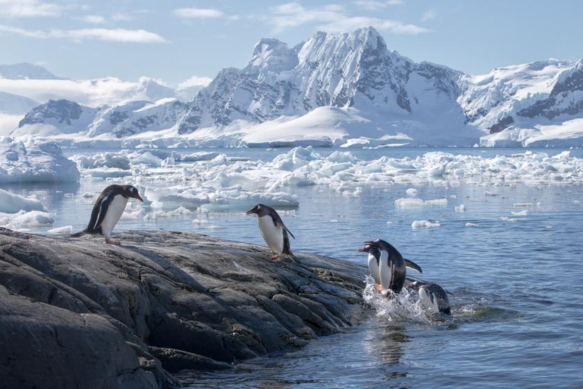 antarcticaeuropaadelies