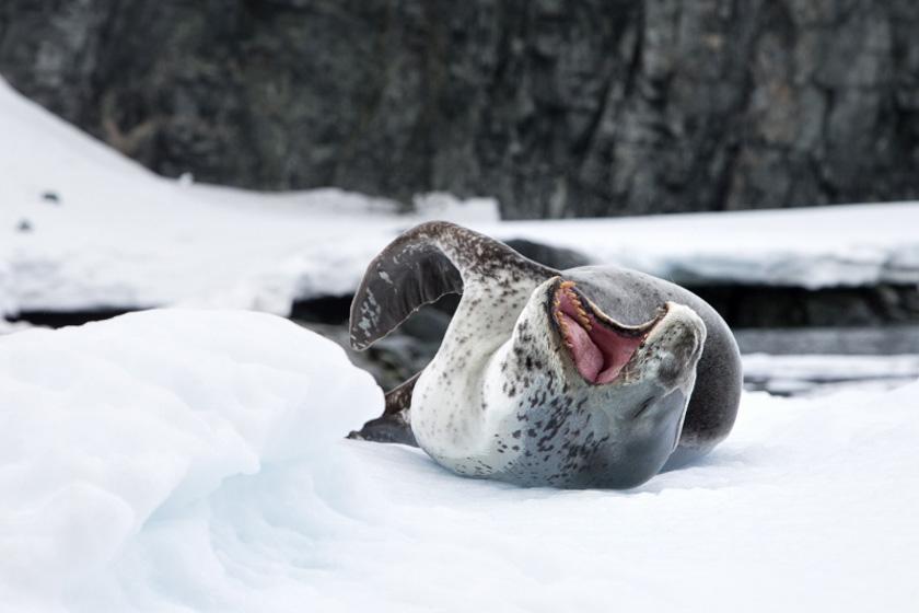 antarcticaeuropasealonice_jordiplanamorales