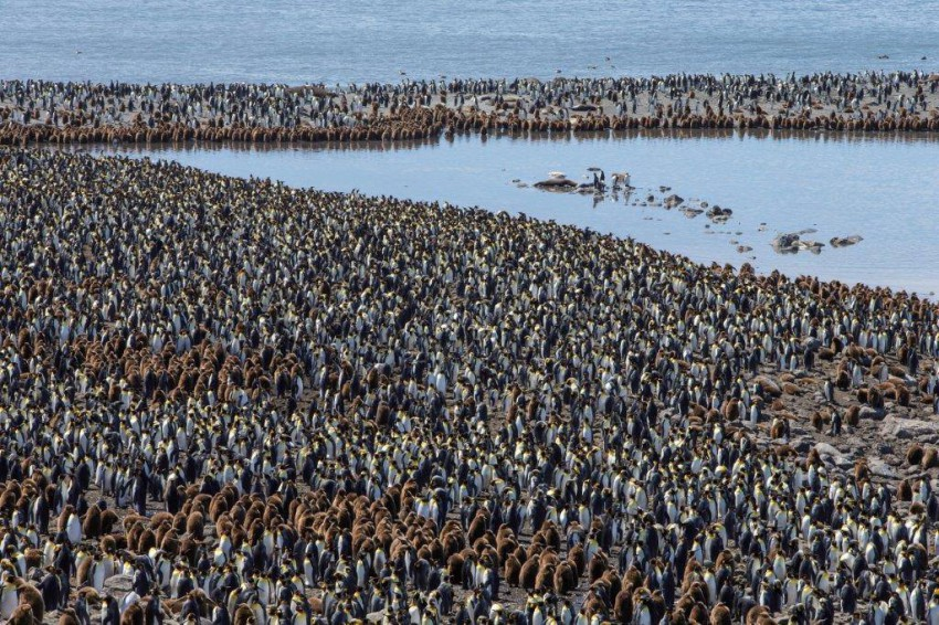 milions-of-pinguins